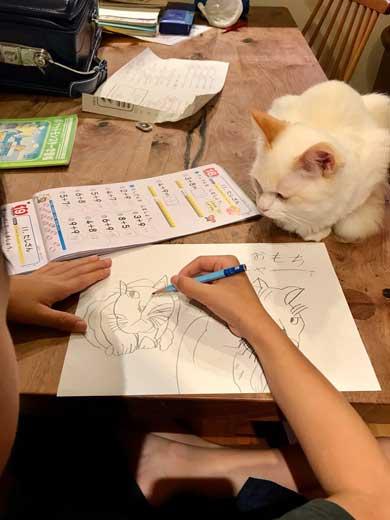 息子 宿題 見守る 猫 お絵描き