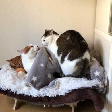 ふれあい まざりたい 猫 迷惑そう 寝姿 添い寝 保護猫