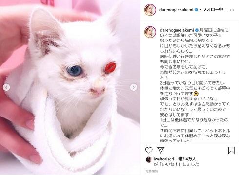 ダレノガレ明美 猫 保護 片目
