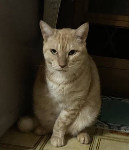 5年越しに見つかった猫ちゃん