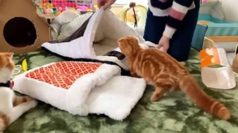 猫 ひな子ちゃん お布団