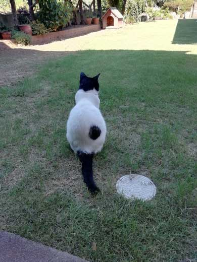 リモート授業 閉め出され 待つ けなげ 猫 息子 大好き ヌンヌン 六花チヨ