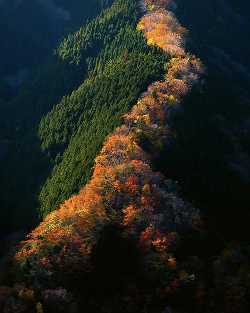 """紅葉の""""昇り龍"""" 奈良の秘境写真に「息を呑むとはこのこと」など感動の声"""
