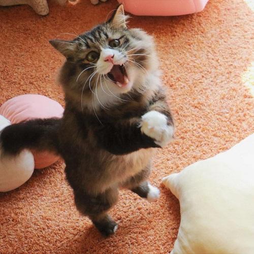 無重力猫ミルコのお家さん