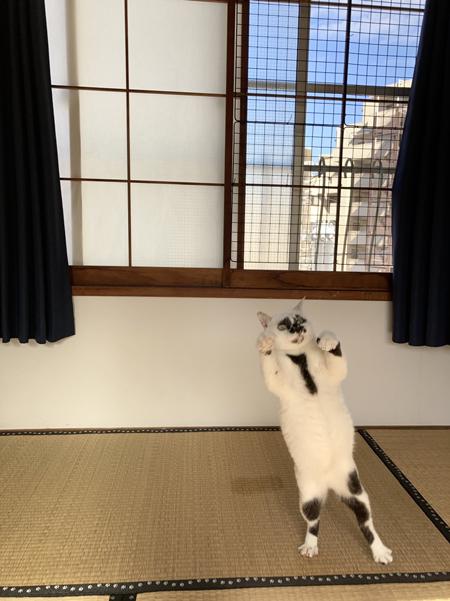 窓を背景にのけぞるミーちゃん