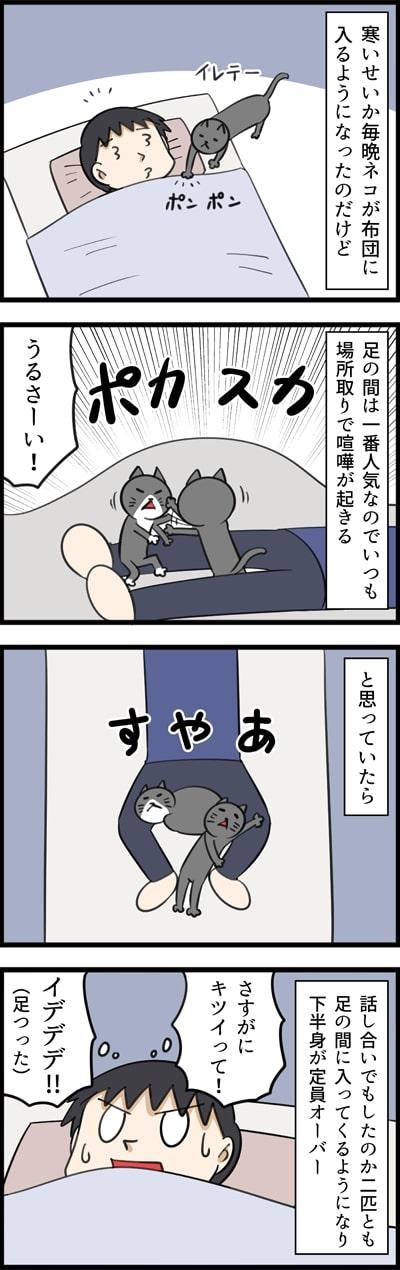 「布団に入るネコの場所取り事情」