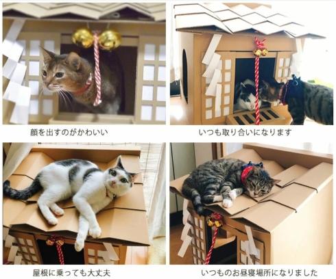 ネコ神社ハウス