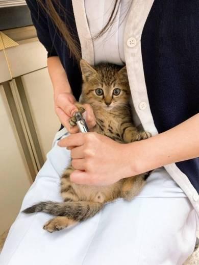 猫 はじめての爪切り きなこちゃん 大豆くん
