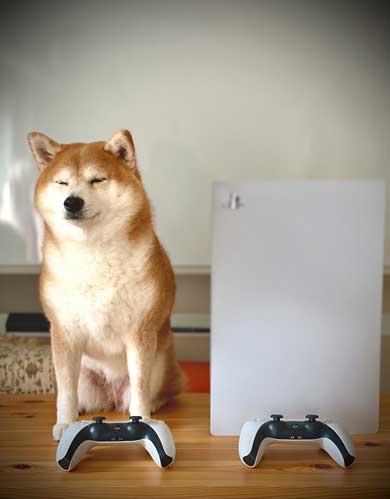 PS5 柴犬 大きさ 同じ 比較 かわいい