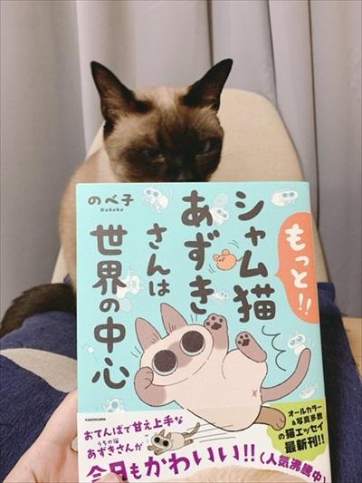 シャム猫あずきさん