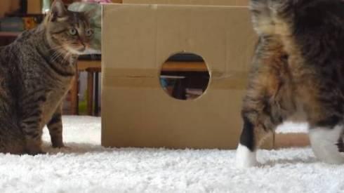 猫 まる 穴につまってる