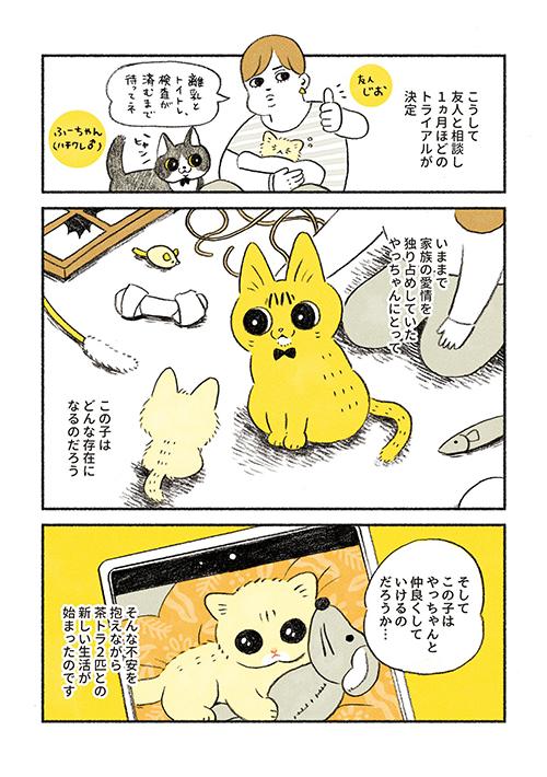 茶トラのちーちゃん3