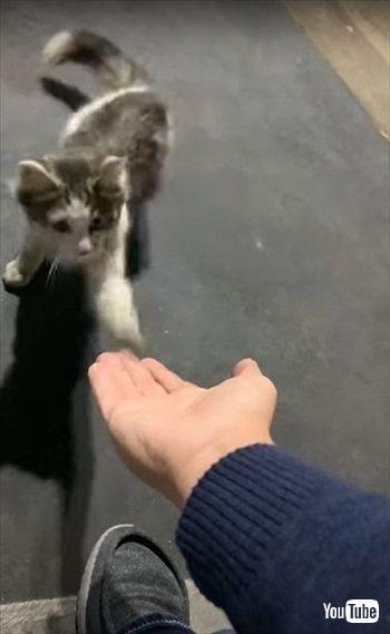マクドナルドで保護された猫ちゃん