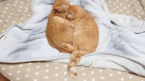 ねじねじ尻尾ネコちゃんたち