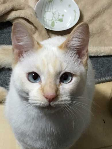 ラップの芯越し 猫 写真 弟子 亡き師匠を偲んで見上げた夜空 アイリスアウト 全日本失敗写真協会