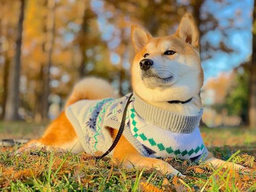 セーターを着ためんまくん