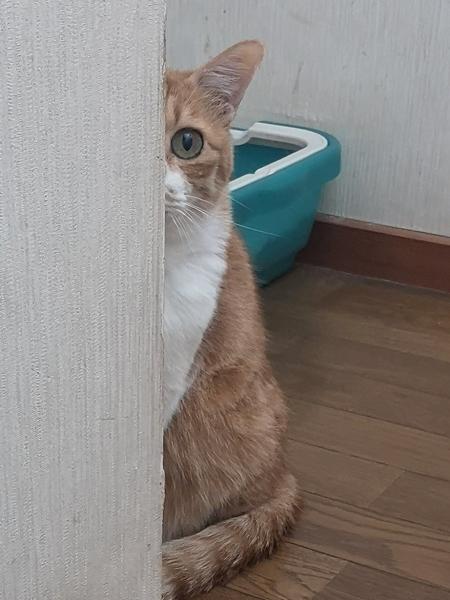 こうなった猫