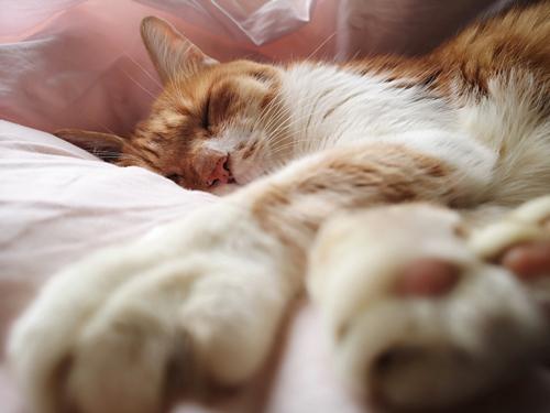 肉球を見せて眠る猫ちゃん