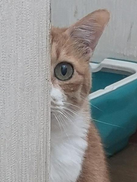 こうなった猫アップ