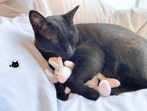 昼寝中 飼い主 鼻を舐められ 猫 舌 ザラザラ 痛み やさしい 黒猫 ろん 漫画