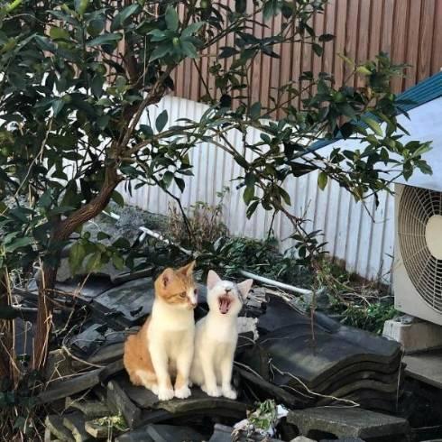 猫 てんちゃん 熊本県 湯島 猫島