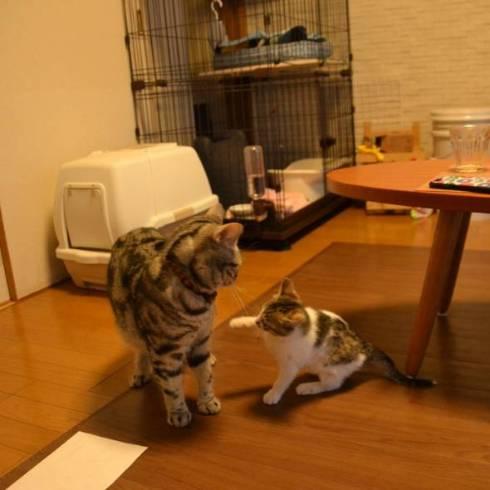 猫 おむかえ初日 リラックス