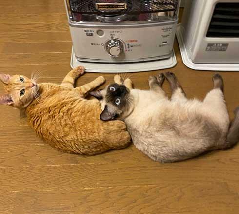 ストーブ つけて欲しい 消される 訴える 猫 シンクロ