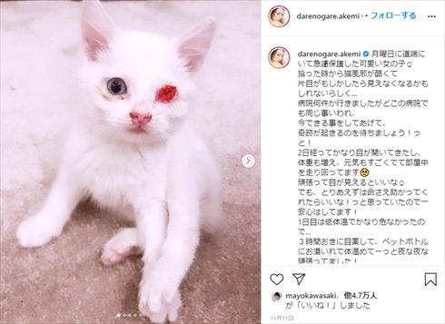 ダレノガレ明美 保護猫 片目 メイ インスタ