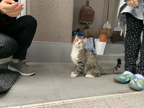 人に囲まれた猫ちゃん