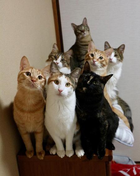 猫ちゃん大集合
