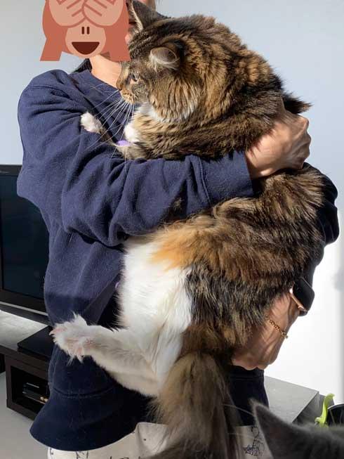 猫 大きい メインクーン 成長 子猫 比較 おそるべし キャットアパートメントコーヒー
