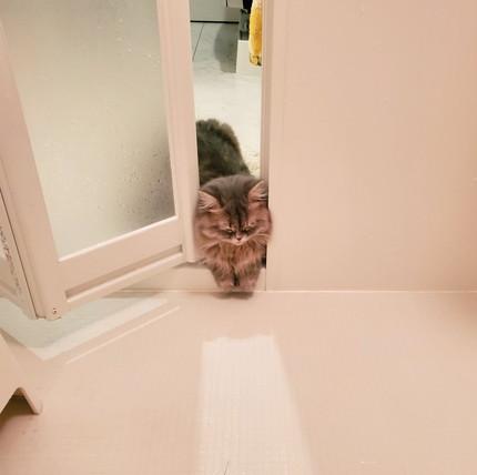 お風呂で寝ちゃったマリーちゃん