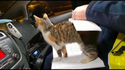 ネコ 子猫 ポーランド 警察