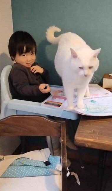 ナデナデしてほしい猫ちゃん