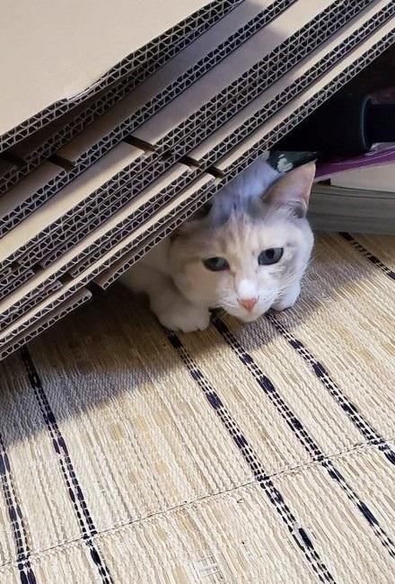 引っ越しても来てくれる猫