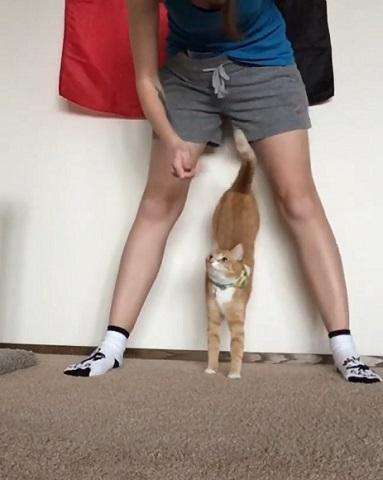 猫サーカス