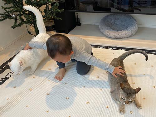 猫を使役する2歳児