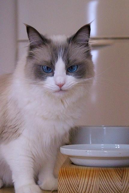 主水(もんど)の猫談