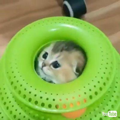 Hides Inside
