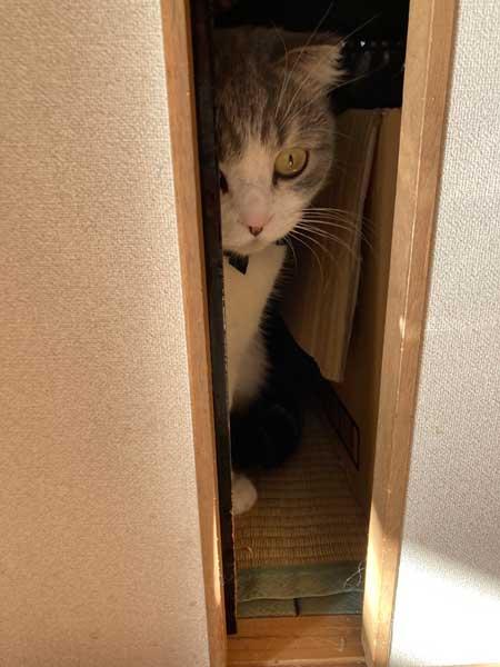 クローゼット 閉じこめ 非常に怒っている 猫 顔 表情 目つき こはく