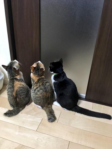 トイレ前3ニャンズ
