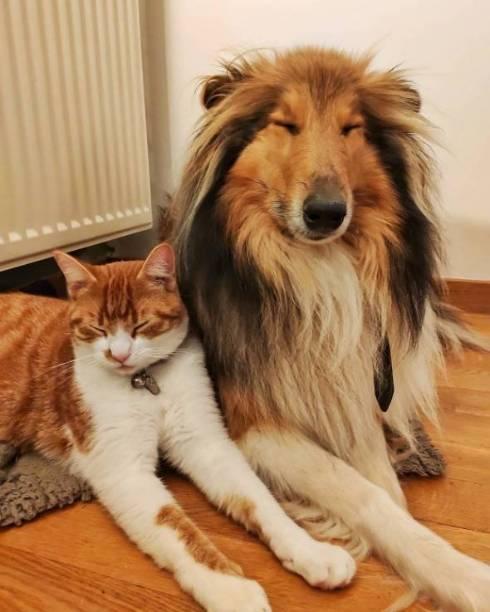 犬 猫 なかよし かわいい