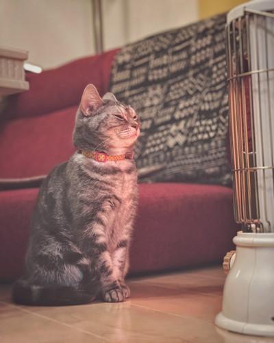 ストーブの前のネコちゃん