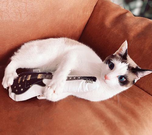 ギターのおもちゃを持つ犯猫