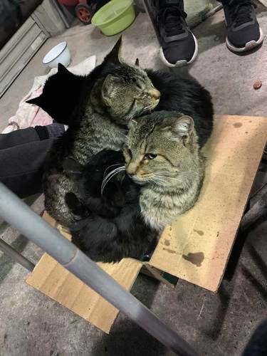 ガレージ 寝た結果 野良 猫 集まる 暖を取る 寝袋