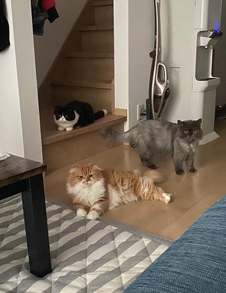 猫ちゃん3匹