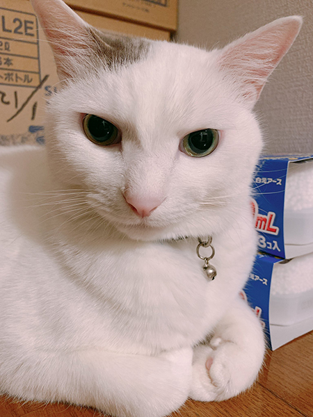 白い方の猫ちゃん顔アップめ