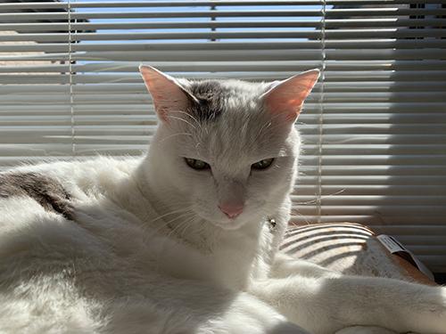ブラインドと白い方の猫ちゃん