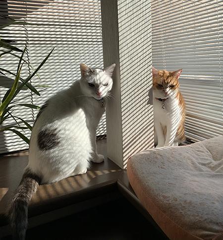 鋭い目をした猫ちゃんアップ
