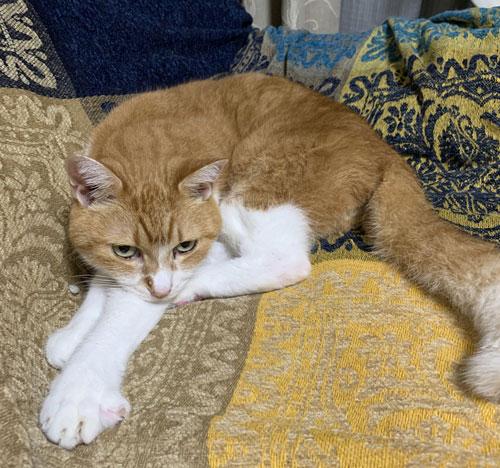 鋭い目線の茶色い方の猫ちゃん